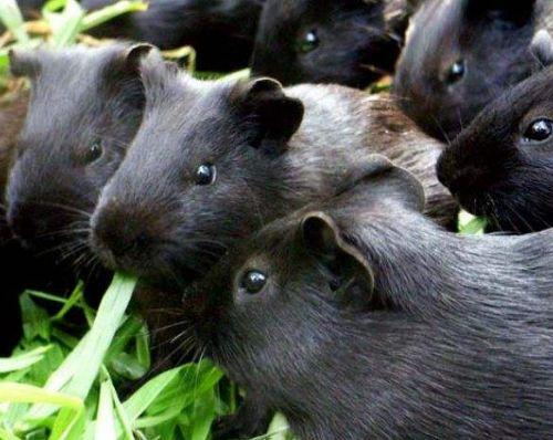 黑豚鼠ballbet安卓版西甲赞助