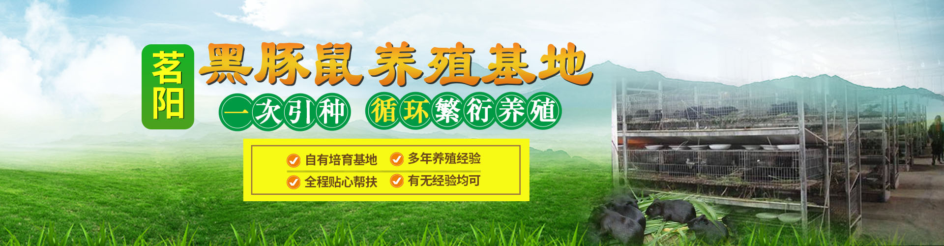 黑豚鼠banner2