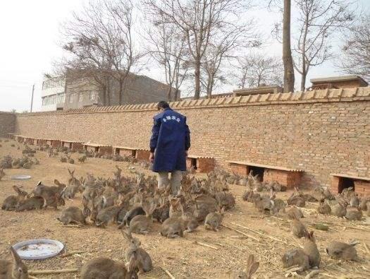 兔子ballbet安卓版西甲赞助基地
