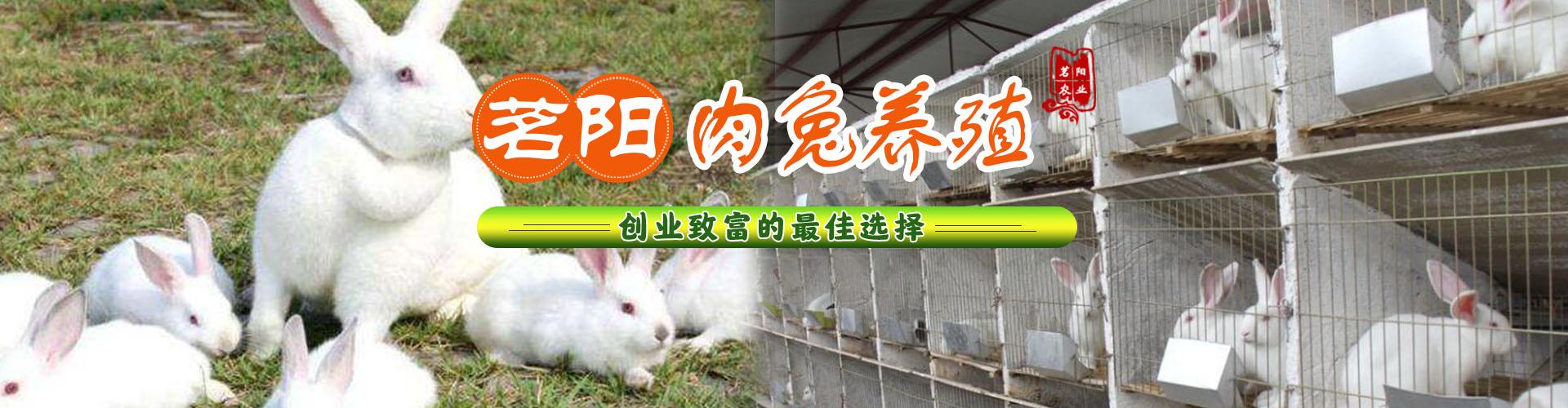 兔子banner2