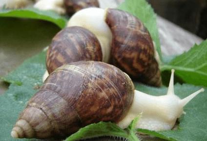 蜗牛ballbet安卓版西甲赞助为农民带来更高的利润!