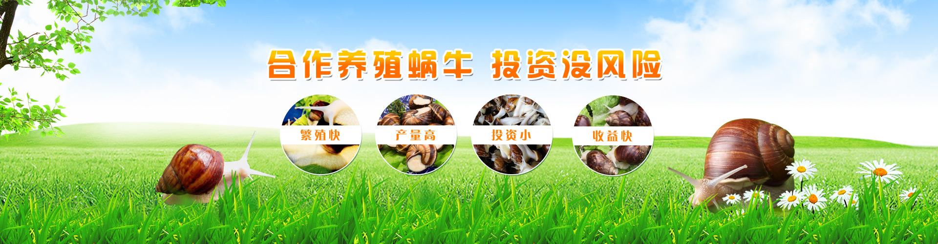 蜗牛banner2